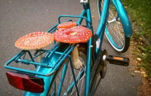 Amanita muscaria na bicicleta