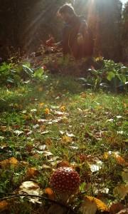 Sol e amanita muscaria